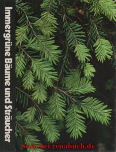 Immergrüne Bäume und Sträucher